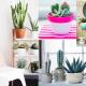 Ze zijn zo leuk! Cactussen.