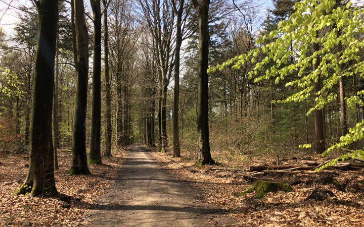 Het heerlijke bos in de achtertuin