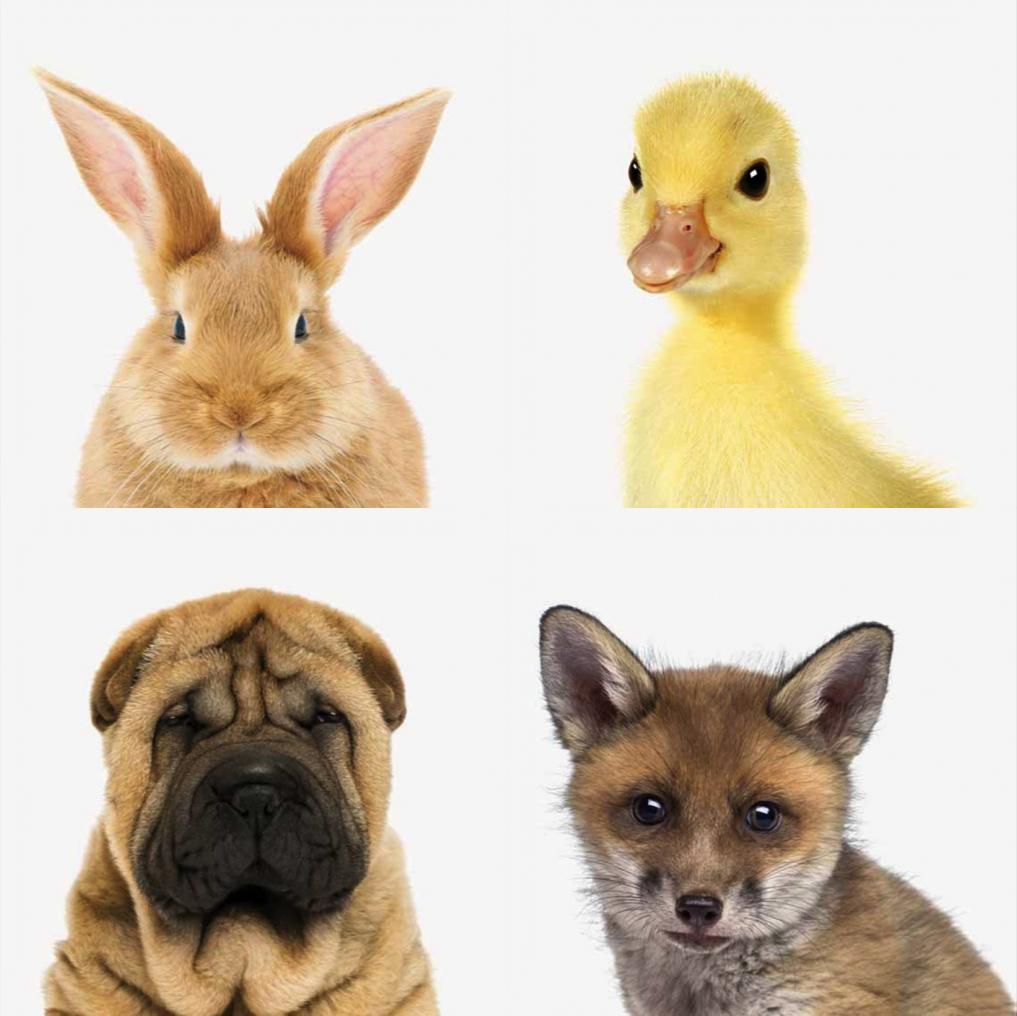 animalart