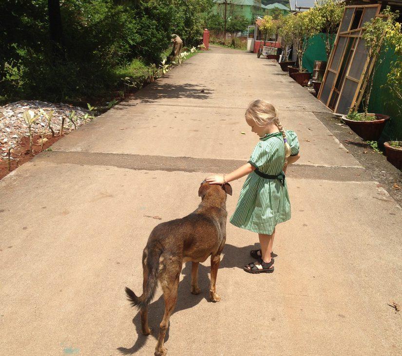 Een Indiase hond beet mijn kind.