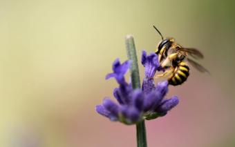 Over de bloemetjes en de bijtjes.