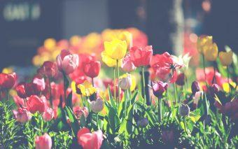 Weet jij al wat je met je tuin wilt doen?