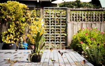 Tuininrichting: waar moet je rekening mee houden?